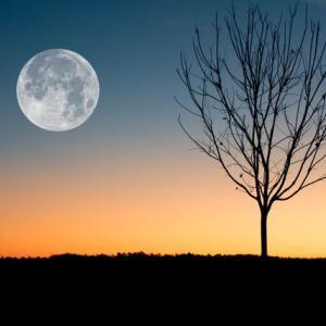 占いミールから満月のお知らせ。