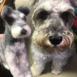 お友達シュナ、本犬とツーショット