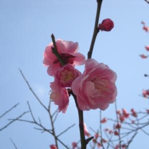 花観る2月