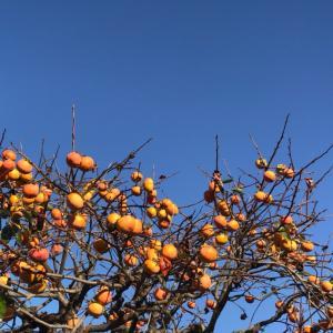 柿色の季節