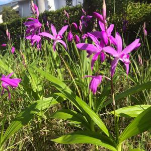 どんな時でも花は咲く!前を向こう!仙台も過ごしやすい季節です☆風は強いけど♪