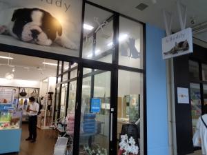 印西市自宅近所のペットショップ アンドバディ すごい血統の犬と猫