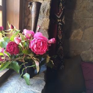 今年、最後の庭のバラ