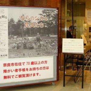 <奈良市美術館> 奈良公園開園140年「ならのシカと昆虫たち」