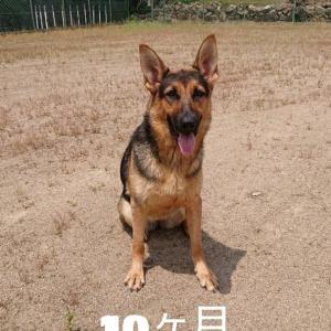 希星〜♪︎生後10ヶ月〜♪︎