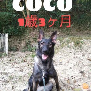 COCO〜♪︎生後1歳3ヶ月〜♪︎