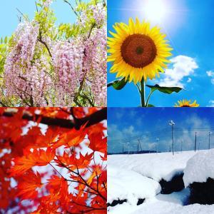 山本園- WITH TEA「四季折々」