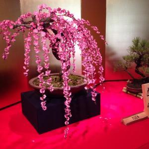 第68回「長浜盆梅展」