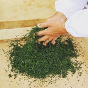 農薬不使用栽培「朝宮茶」まるごと体験