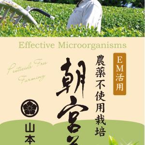 農薬不使用栽培「朝宮茶」