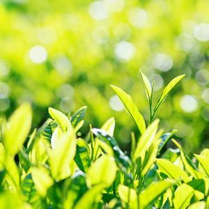 第31回茶審査技術競技大会「準優勝」