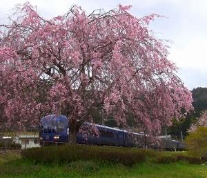 丹後の海(KTR8000形)の6輌フル編成が安栖里駅の枝垂れ桜を愛でながら駆け抜ける