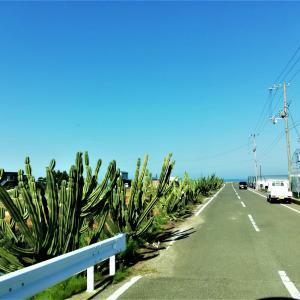 香川県はウユニ塩湖、ナスカの地上絵、エーゲ海、サボテンが観られる大四喜県なのだ