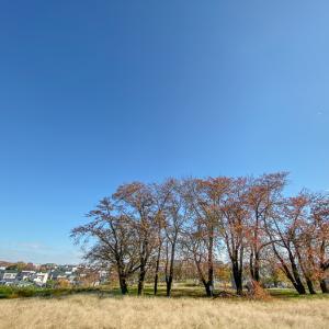 iPhone11pro 超広角レンズで撮る 街の秋