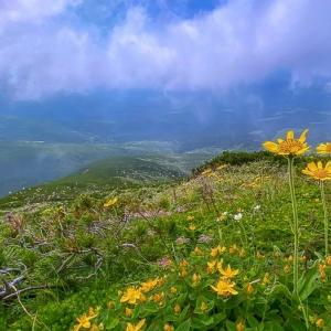 ガスに煙る花の山 富良野岳
