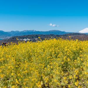 標高136mの頂きにて 里山菜の花ハイク