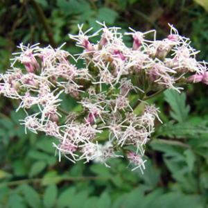 二上山 10月の花3