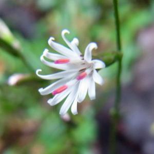 二上山 10月の花4