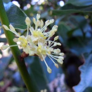 二上山 11月の花1