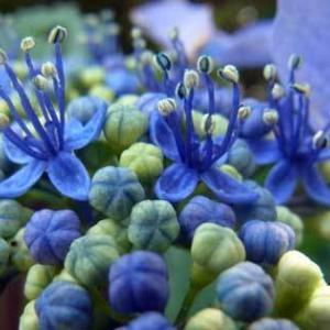 二上山 6月の花3