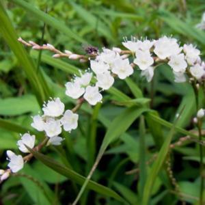 二上山の花9月4