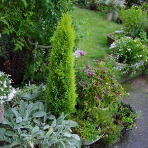 庭は すっかり緑色(´へωへ`*)
