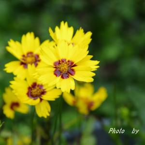真坂の天気に_| ̄|○がっくし 明るい花色で(*^-^*)v