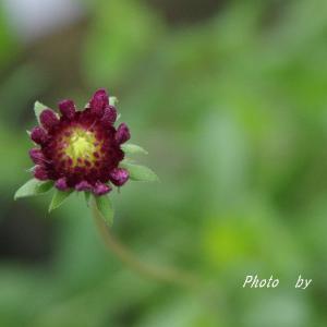 まだまだ 梅雨とはサヨナラ出来そうもなく 花に癒しを♡