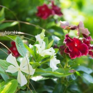 輝く日射しの中で 花 花 花   そして ピッカピカの金メダル おめでとう~~~♪