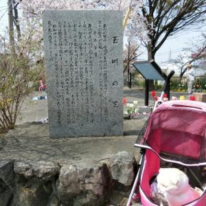 sakori家 お花見2019~玉川の里&ランチ編~