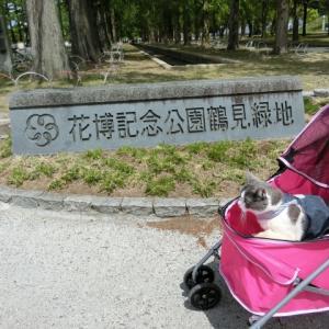 花博記念公園鶴見緑地 バラ園散策2019