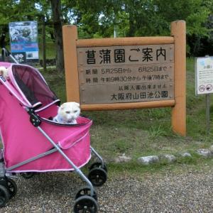 山田池公園散策 2019 ~菖蒲園編~