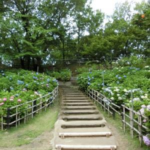 山田池公園散策 2019 ~紫陽花編~