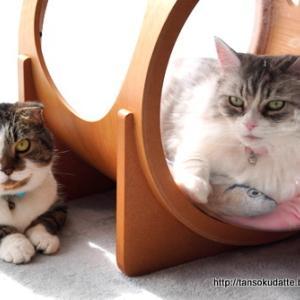 レディの扱いが下手な猫