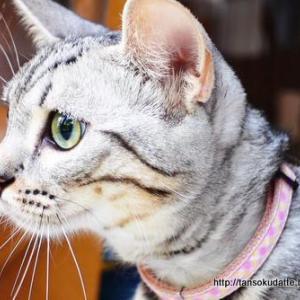 また猫にとっての楽しいエンタメ