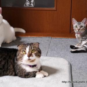 3猫ずつです。
