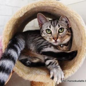 トンネル好き猫