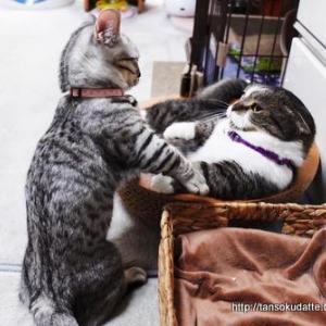 子猫VSおとな猫