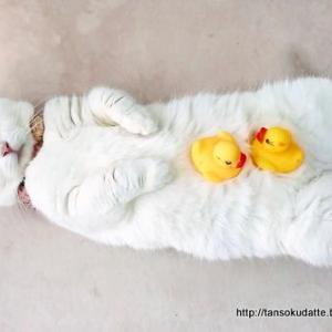 白猫の魅力って…?