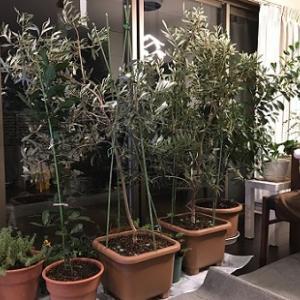 ベランダ植物に占領されるリビング