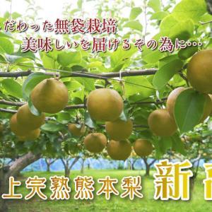 熊本梨 ジャンボ梨『新高』 令和元年度の予約販売の受付をスタート!! 初出荷は9月24日(火)です!
