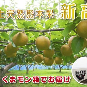 熊本梨 「本藤果樹園」今年も幸水、秋麗、豊水、完売御礼!ジャンボ梨『新高』は9月27日より出荷!