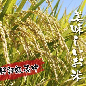 七城米 長尾農園 令和元年度の新米を先行予約受付中!! 美しすぎる田んぼの稲刈り2019(前編)