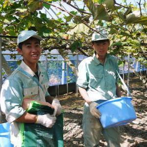 熊本ぶどう 社方園 収穫を終えたぶどう園にお礼肥えです!鹿本農業高校から来た実習生と共に(2019)後編