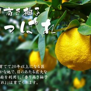 令和元年度の色付いた『香り高き柚子』本日より先行予約受付スタート!!商品ラインナップ紹介!