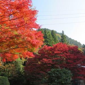 菊池、阿蘇スカイラインの、2019年の紅葉は今週末が見ごろ!菊池渓谷ビューポイント&穴場スポット紹介!
