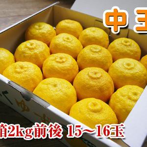 令和元年度の香り高き柚子『あっぱれ』数量限定再入荷します!『冬至用柚子』残りわずかですお急ぎ下さい!!