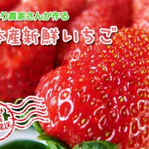 熊本産高級イチゴ『完熟紅ほっぺ』本日より発送開始!完熟の美味さ!朝採りの新鮮さ!大好評発売中!
