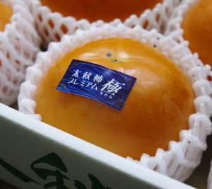 太秋柿 剪定作業2020 今年は今までと全く異なり低く仕上げています(後編)