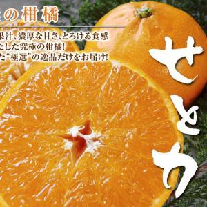 究極の柑橘「せとか」 令和2年も出荷は2月中旬より!収穫まで1ヶ月前の様子を現地取材(後編)